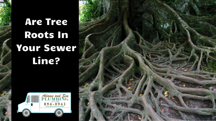 Are Tree Roots in Your Sewer Line?
